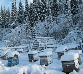 Догляд за бджолами взимку