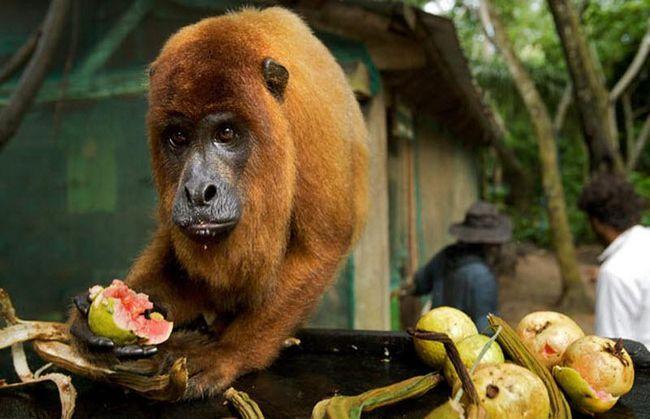 Основне завдання центру - порятунок мавп, птахів, пум і ягуарів з чорних ринків і ситуацій насильства.