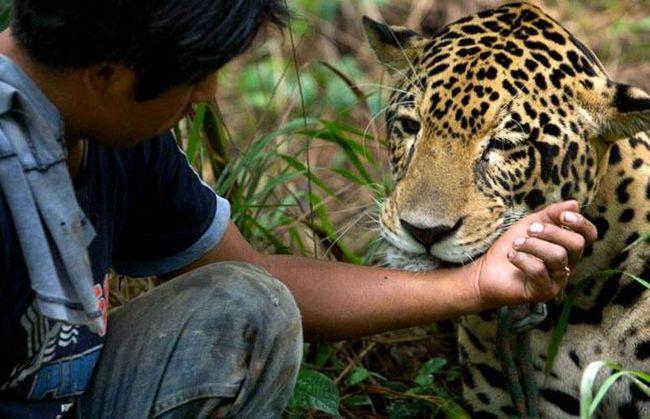 Працівник притулку Джайме виховує Ягуара з дитинства. Зараз рупі важить майже 136 кг і вважається головним самцем притулку