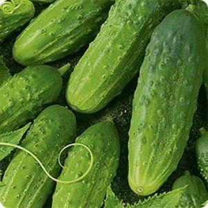 Огірки сорту «Алтай» дуже смачні в будь-якому вигляді