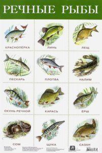 види річкової риби