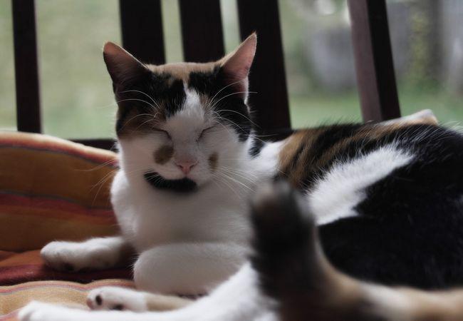 Заспокійливі краплі фітекс для кішок: інструкція, відгуки