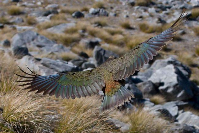 Вчені знайшли батьківщину всіх птахів.