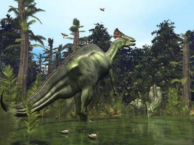 Різні види гадрозавров відрізнялися формою дзьоба і наростами на голові.