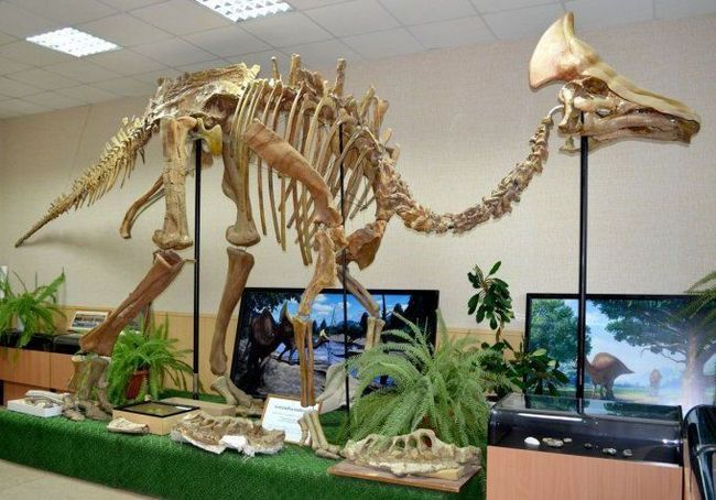 Скелет гадрозавра.