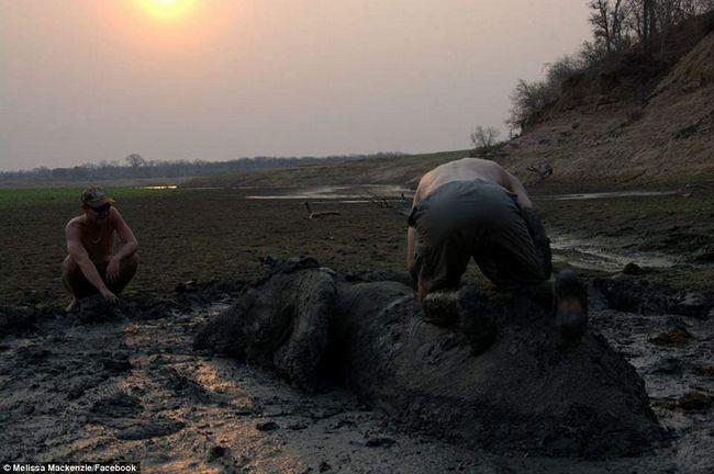 Рятувальники намагаються обв`язати слона за живіт.