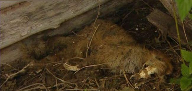 Невідома істота, яке місцеві жителі прозвали чупакаброю.