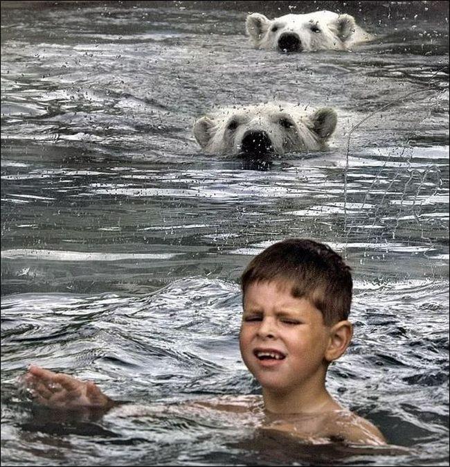 У басейні з білими ведмедями