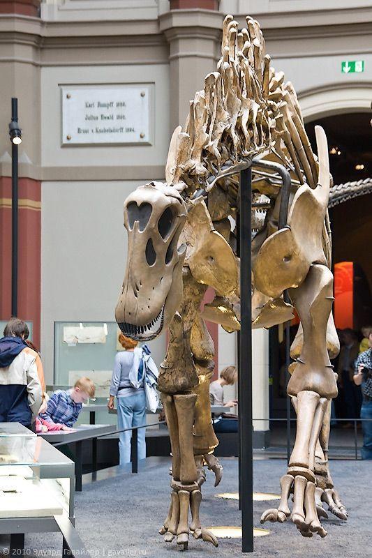 У Берлінському музеї природознавства (Museum f r Naturkunde)