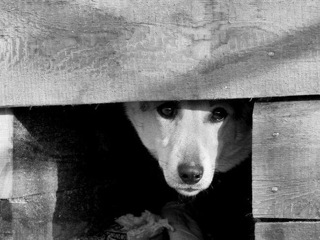 У Севську Чоловік по-звірячому убив собаку.