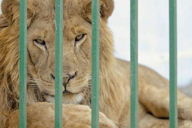 У Гюмрі гинуть тварини з приватного зоопарку.