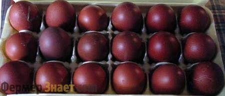 Яйця курей породи Маран