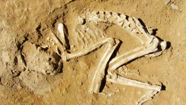 У стародавньому єгипті екзотичні тварини приносилися в жертву після смерті їх господаря