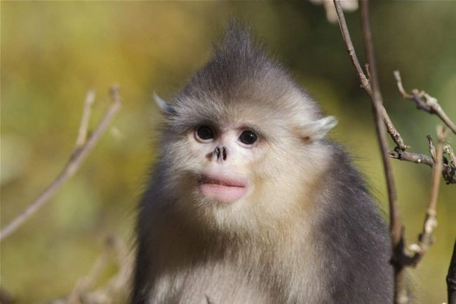 Мавпа, що чхає і риба, яка вміє ходити - нові знахідки вчених.