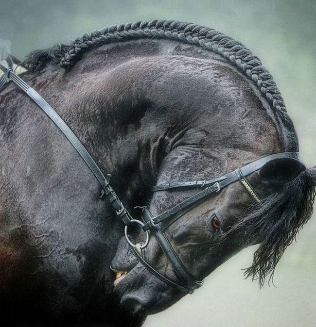 В ірані виявлено найстаріші останки каспійської коні