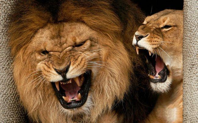 Леви вбили південноафриканського сироту.