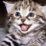 В яких кольорах бачить звичний світ ваша кішка?