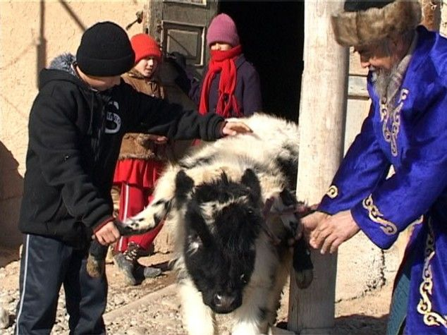 У казахстані живе теля, у якого шість ніг і три роги