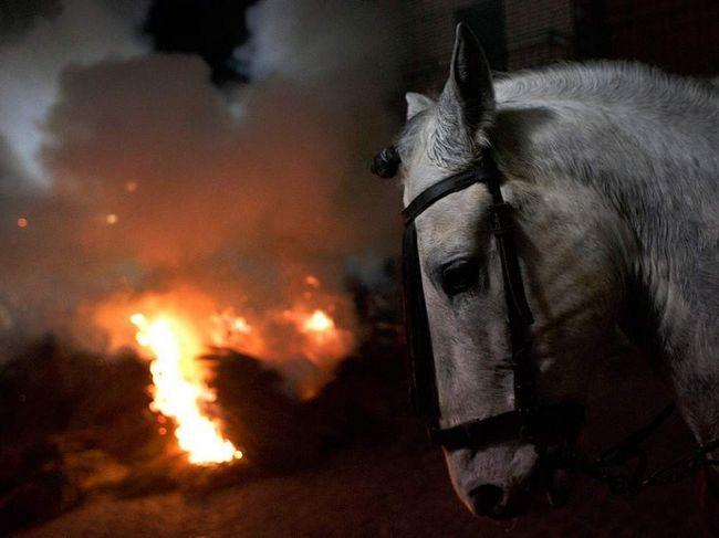 Коні згоріли разом зі стайнею.