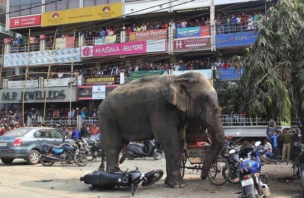 Жу Сю Ня - слон, який напав на ремонтників в Китаї.