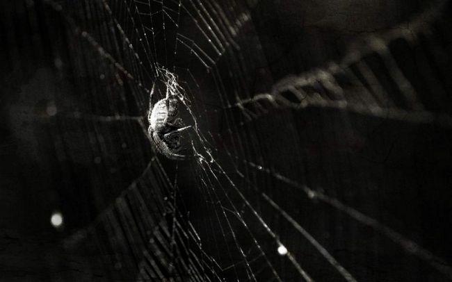 Павук заліз в вухо і сплів там павутину.