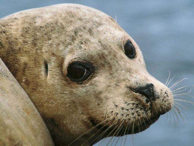 Тюлень з`їв пакет і помер.