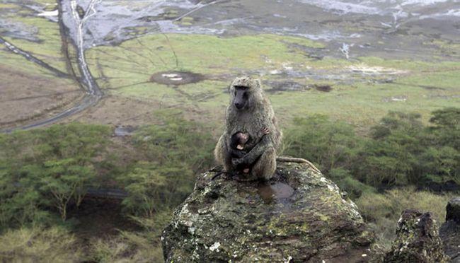 У світі мавп
