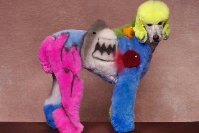 У Нью-Джерсі відбувся конкурс по грумінгу собак