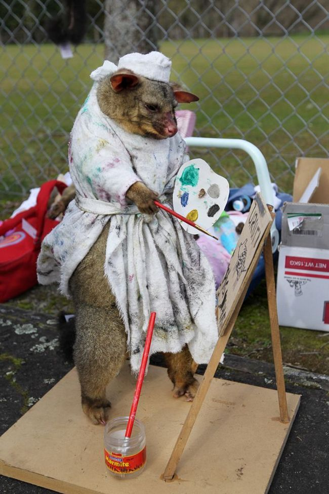 У Новій Зеландії пройшов конкурс краси серед мертвих опосумів