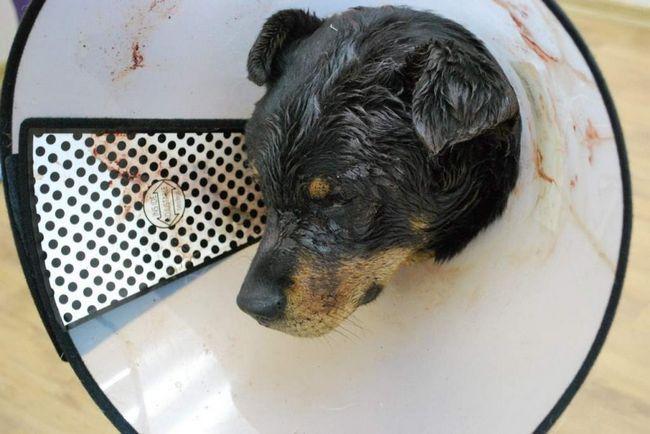 У Новосибірську побили собаку.