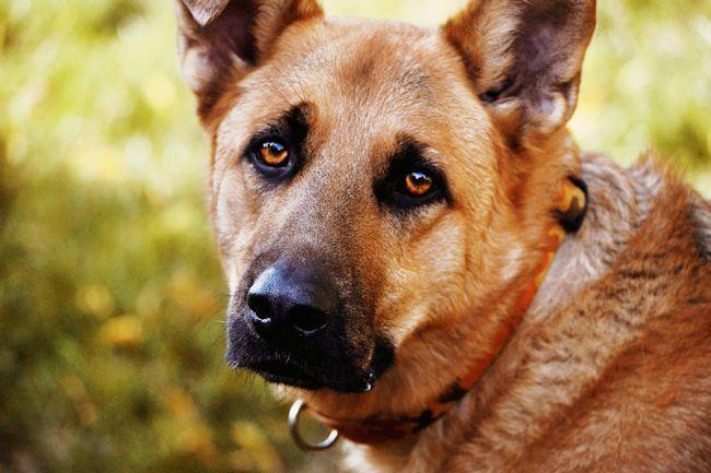 Тепер мало хто вижили собаки чекають коли у них буде новий будинок.