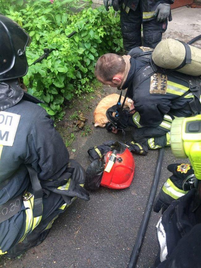 Пітерські пожежники врятували кота.