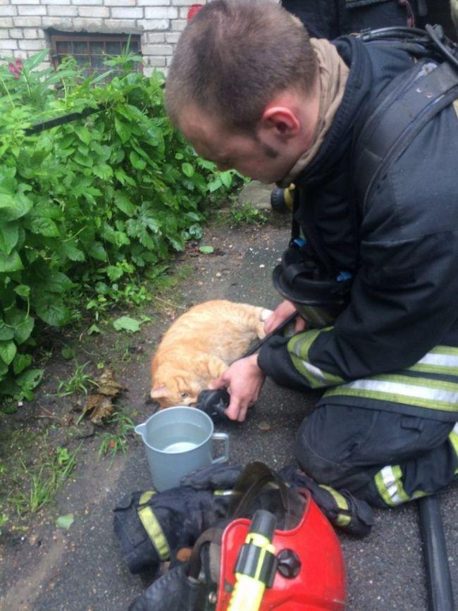 Подихати киснем і напоєне водою кіт прийшов в себе і повернувся в квартиру.