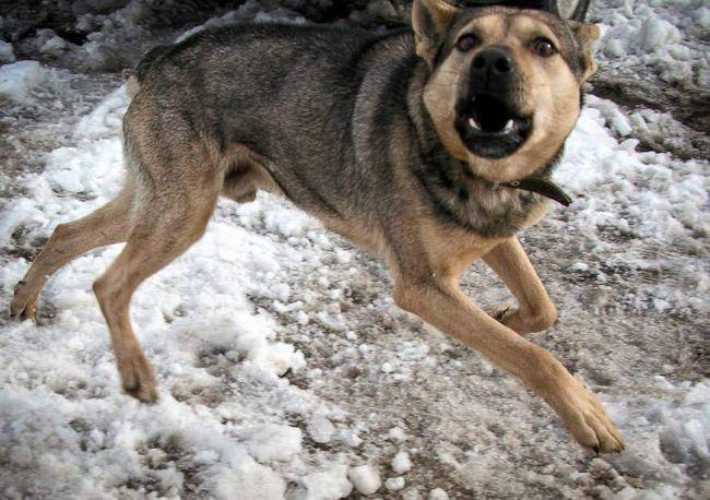 Собака вкусила господаря, а потім покусала себе і померла.
