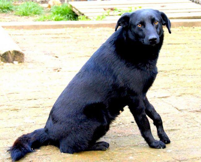 Собака врятував хлопчика в США.