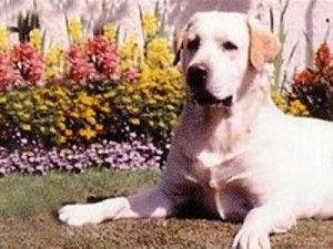 У США активно клонують собак
