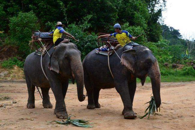 Слон втік з туристами на спині.
