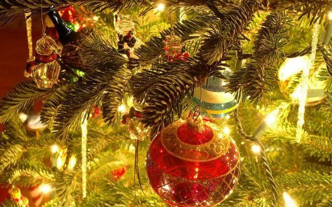У вашій новорічній ялинці мешкає, по крайней мере, 10 000 непроханих гостей