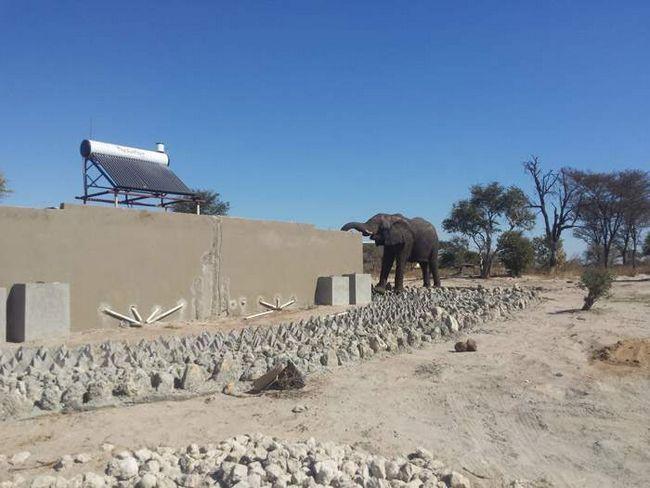 Спочатку слон просто ходив навколо туалету.
