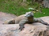 У зоопарку сінгапуру з`явився власний дракон