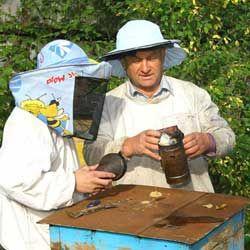Важливе про бджільництво для початківців: з чого почати і як доглядати за бджолами
