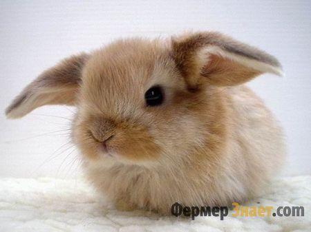 Маленький і гарненький кроль