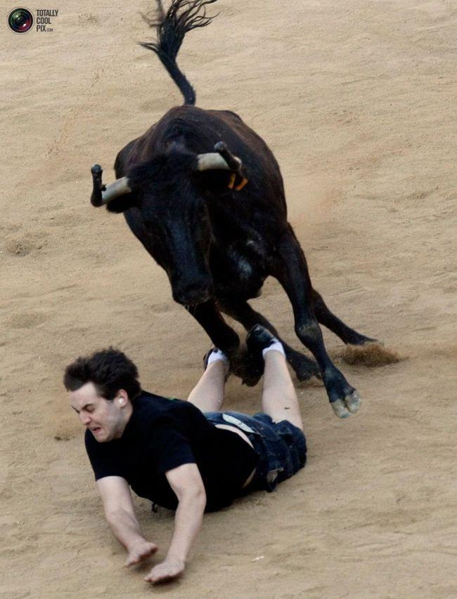вендетта биків