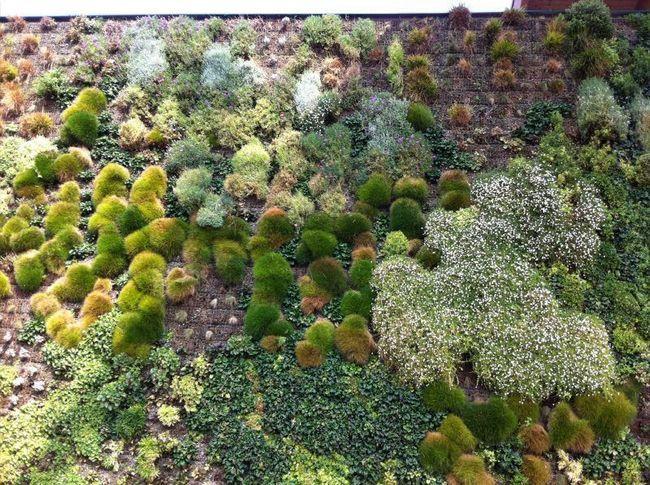 Вертикальний сад торгового центру Фіордалісо