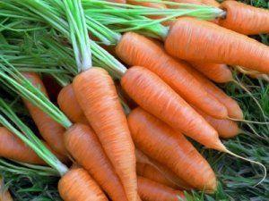 Весняна посадка моркви