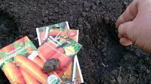 Краще садити вимочені насіння