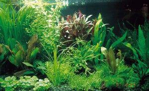 Види акваріумів
