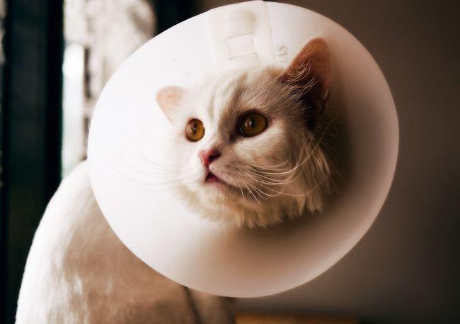 Види позбавляючи у кішок: симптоми і лікування