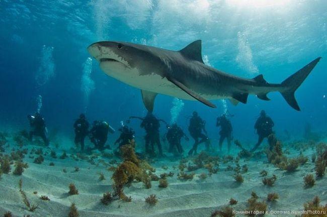 Разом з акулами