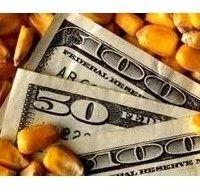 Позабіржовий ринок кукурудзи і пшениці в україні на 10 серпня